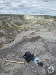 Un sac et un pic sur le sol à côté du fossile de tortue.