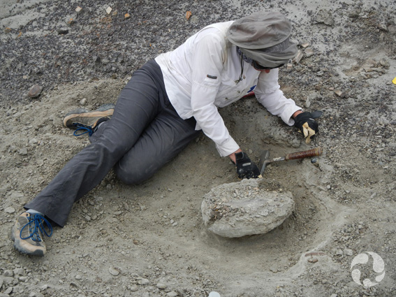 Margaret Currie au sol à côté du spécimen de tortue.