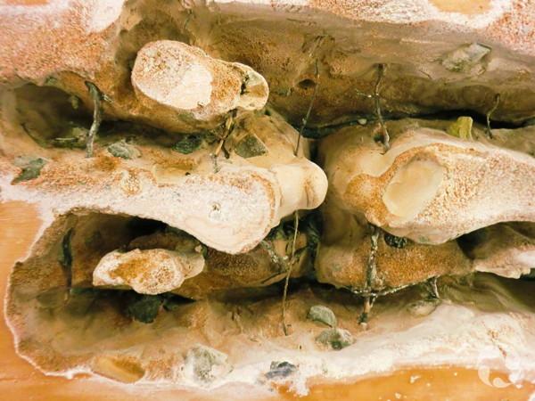Coupe transversale d'un nid de fourmis en plâtre comportant de nombreuses cavités.