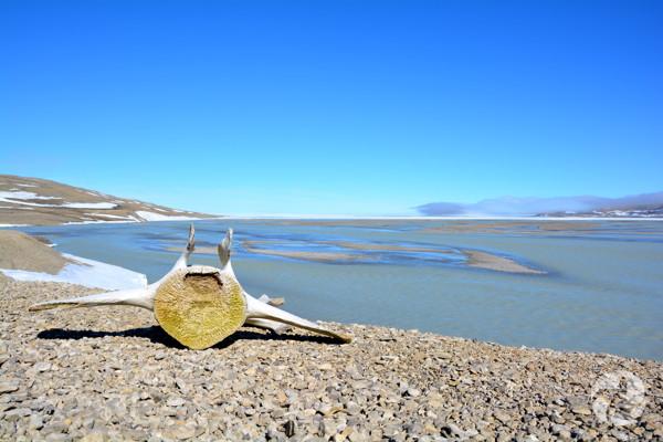 Vue panoramique de la baie de Cunningham montrant une vertèbre de baleine sur les rives rocheuses.
