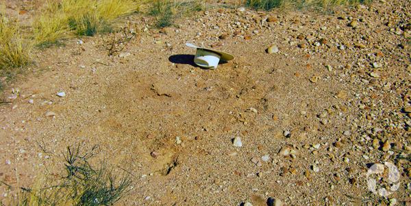 Un chapeau est placé près d'un nid de fourmis moissonneuses dans le désert de l'Arizona.