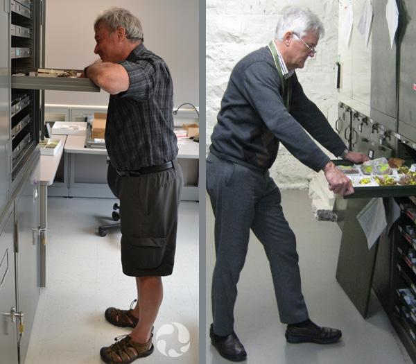 Deux photos, chacune montrant un homme devant une rangée d'armoires en train d'ouvrir un tiroir de spécimens.