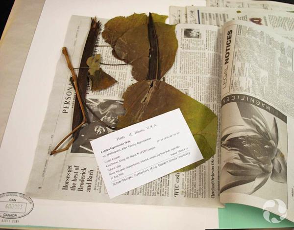 Une page de journal ouverte révélant une plante pressée et une étiquette.