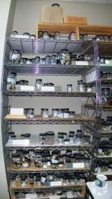Étagères chargées de bocaux contenant des spécimens marins.