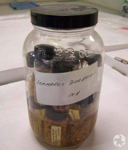Un bocal contenant des spécimens de crustacés dans des flacons.