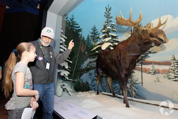 Un homme et une fillette devant le diorama de l'orignal, Alces alces.