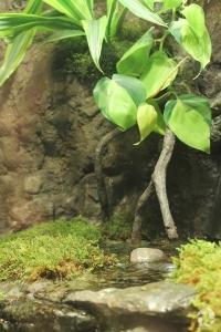Un terrarium avec plantes et petit plan d'eau.