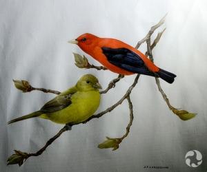 Une peinture de Pirangas écarlates (Piranga olivacea) sur une branche.
