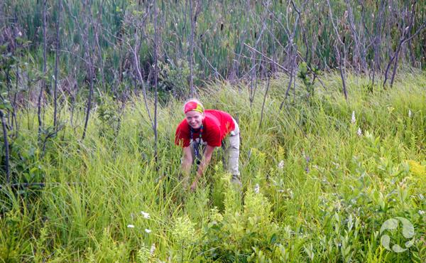 Une femme cueillant des plantes dans un milieu humide.
