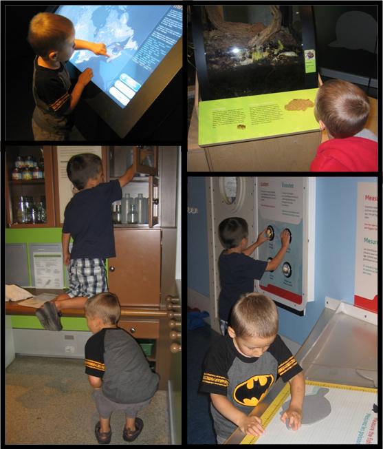 Collage de quatre photos montrant deux jeunes garçons qui regardent des insectes dans un terrarium ou qui s'amusent avec des jeux et des activités interactives dans les galeries du Musée.