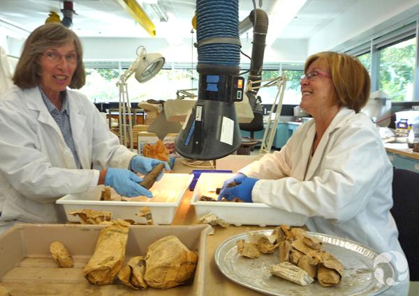 Deux femmes assises à une table, sous une hotte d'aération, déballent des fragments de dinosaure emballés dans du papier journal.