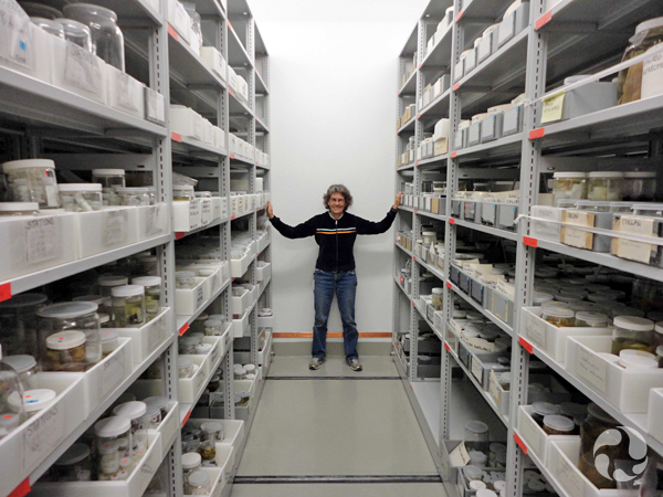 Kathy Conlan debout entre deux rangées de hautes étagères où sont conservés des spécimens d'invertébrés.