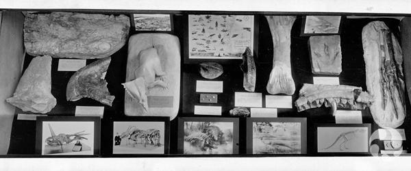 Gros plan d'une vitrine contenant des os, des dessins et des modèles de dinosaures.