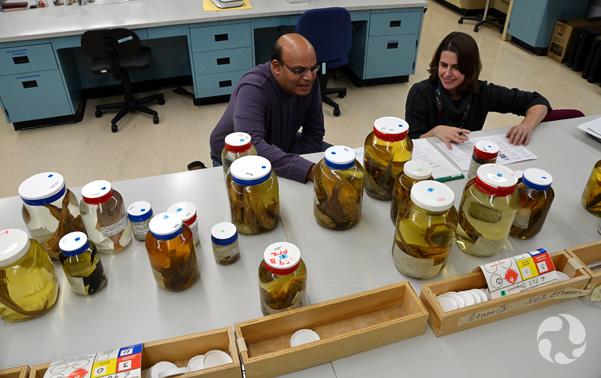 Noel Alfonso et Susan Swan derrière une grande table sur laquelle se trouvent de nombreux bocaux contenant des poissons.