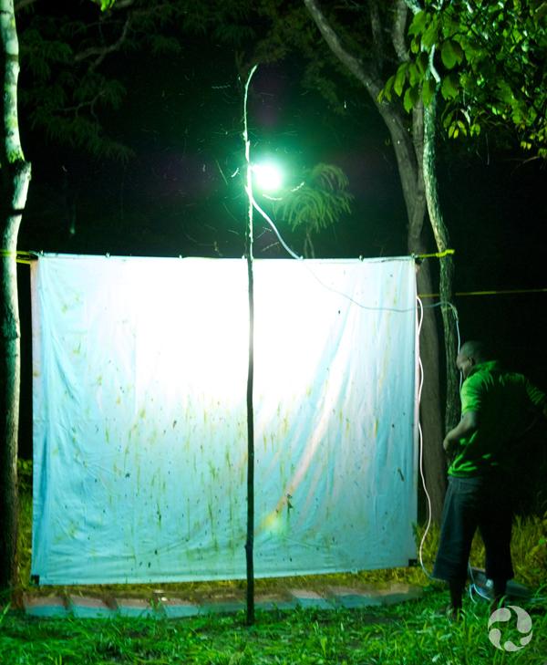 Un drap blanc illuminé, tendu entre des arbres à l'extérieur.