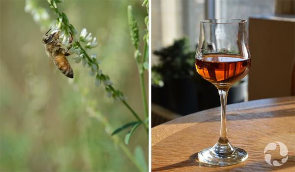 Collage : Un insecte pollinisateur sur une plante et un verre d'hydromel sur une table.