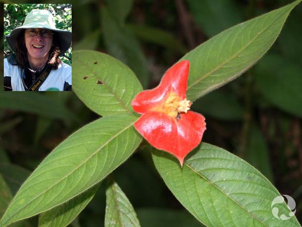 Collage : Lynn Gillespie (en médaillon) et un spécimen de Psychotria poeppigiana.