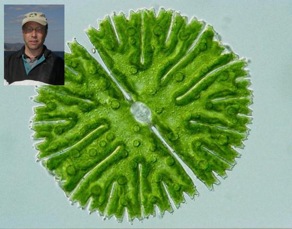 Collage : un spécimen d'algue Micrasterias thomasiana et, en médaillon, le chercheur Paul Hamilton.