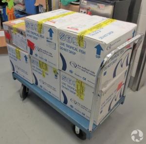 Des boîtes de carton empilées sur un chariot.