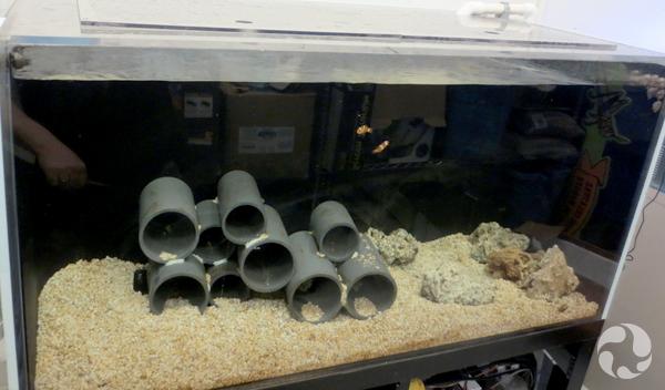 Un aquarium sans eau.