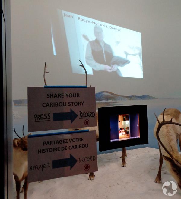 Diorama du caribou (Rangifer tarandus), avec la projection d'une vidéo sur le mur du fond et des pancartes et un ordinateur mobile fixés à la vitrine.