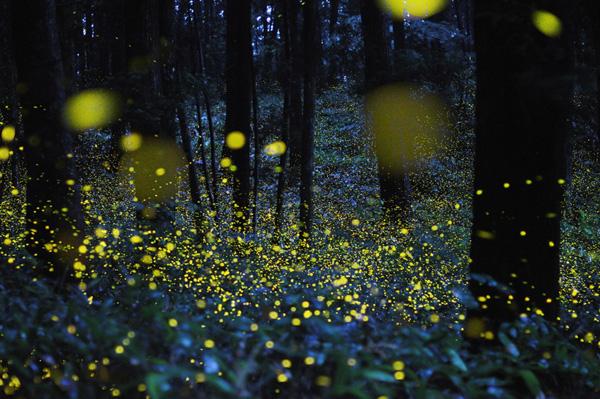 Une forêt dans la nuit, illuminée de petits points brillants.