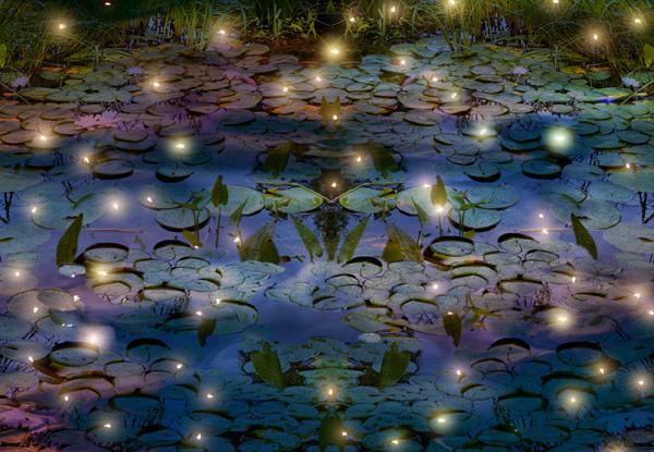 De petits points lumineux au-dessus d'un étang, en soirée.
