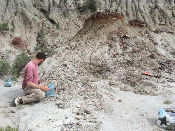 Assis au sol, Scott Rufalo collecte des échantillons dans un site fossilifère.