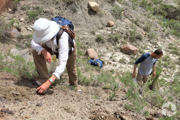 Deux personnes collectant des restes de dinosaures sur une pente.