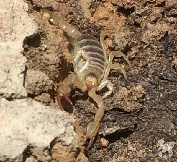 Gros plan d'un scorpion.