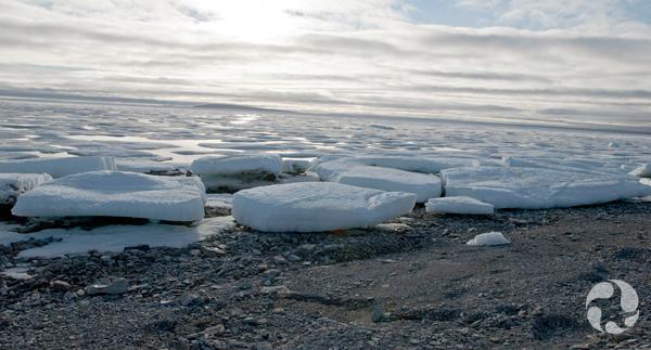 Radeaux de glace flottant dans l'eau jusqu'au rivage.