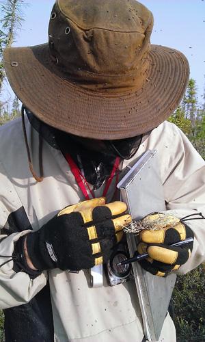 Le botaniste Troy McMullin porte une tenue pour se protéger de la nuée de mouches noires qui l'entoure.
