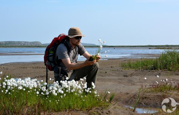 Un botaniste du musée s'agenouille près de la rivière Coppermine en montrant des plantes collectées