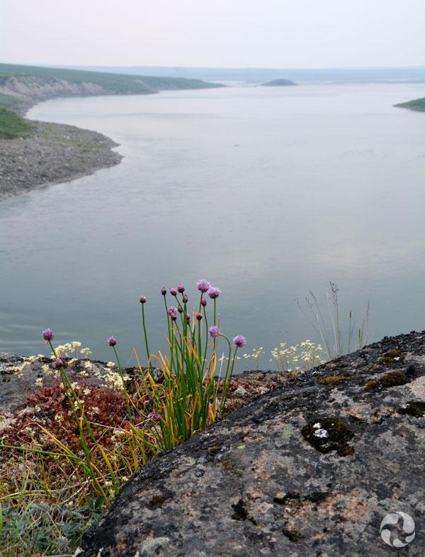 Vue d'un cours d'eau avec des oignons sauvages (Allium schoenoprasum) au premier plan.