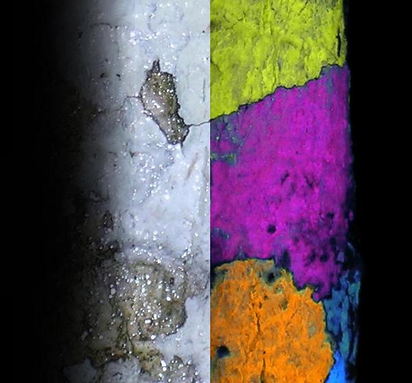Collage : Une section du tronc d'un arbre couvert de lichen sous une lumière blanche et le même tronc d'arbre sous rayonnement U.V., montrant les diverses couleurs de la fluorescence des lichens.