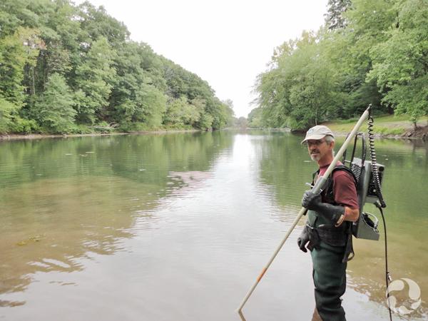 Claude dans l'eau jusqu'aux genoux avec l'équipement de pêche électrique pour collecter des lamproies.