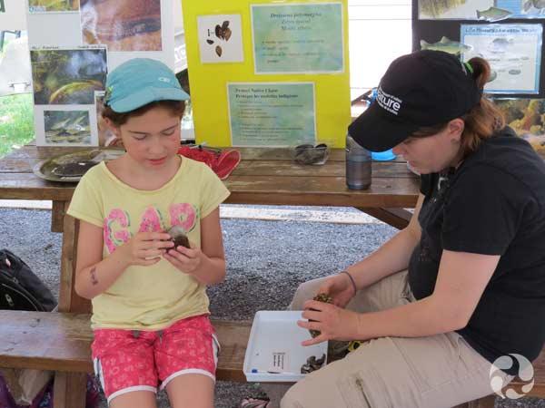 Une enfant examine comment des moules zébrées peuvent recouvrir la coquille d'une moule indigène.
