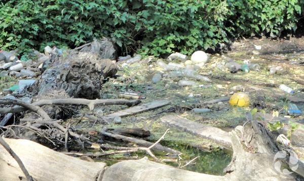 Gros plan des ordures coincées dans l'embâcle de la rivière Saw Mill.