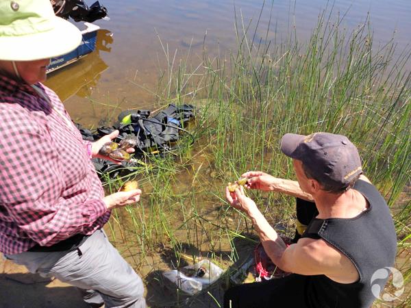 Deux personnes examinent des moules sur la berge d'une rivière.