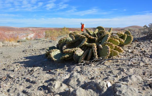 Un cactus dans le désert.