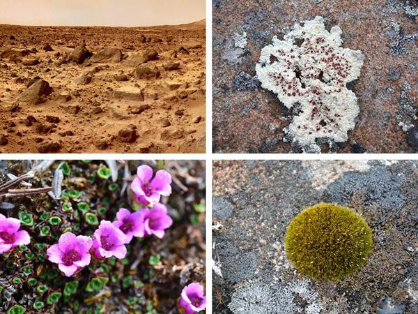 Collage : Paysage dénudé et inhospitalier, un lichen sur une roche, une mousse sur une roche et une plante à fleurs.