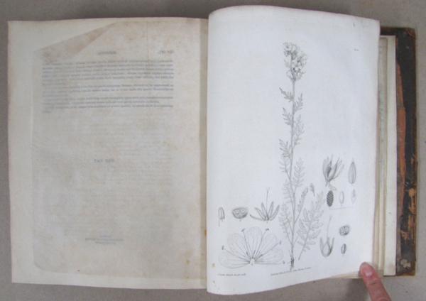 Page du livre présentant une illustration scientifique en noir et blanc d'une plante.