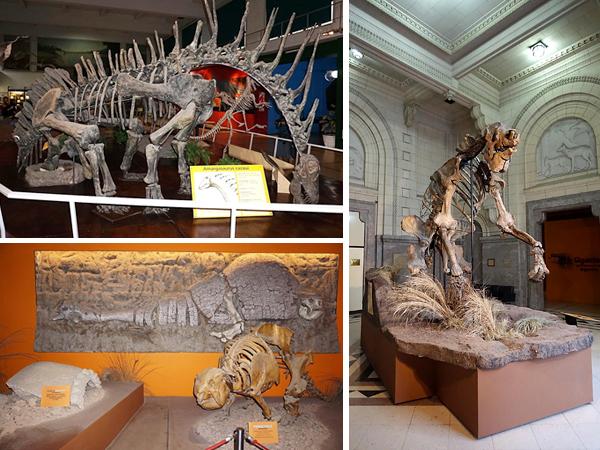 Collage de photos : Squelette de dinosaure. Squelette d'unau géant. Spécimens de glyptodons.