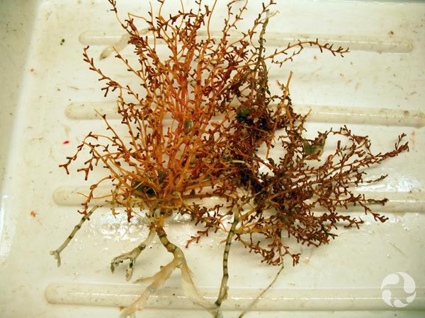 Des coraux bambou dans un bac en plastique.