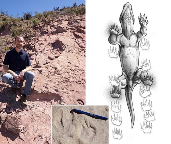 Collage de photos : Un homme assis à côté d'empreintes animales imprimées dans la roche. Plan rapproché d'empreintes. Dessin d'un tétrapode.