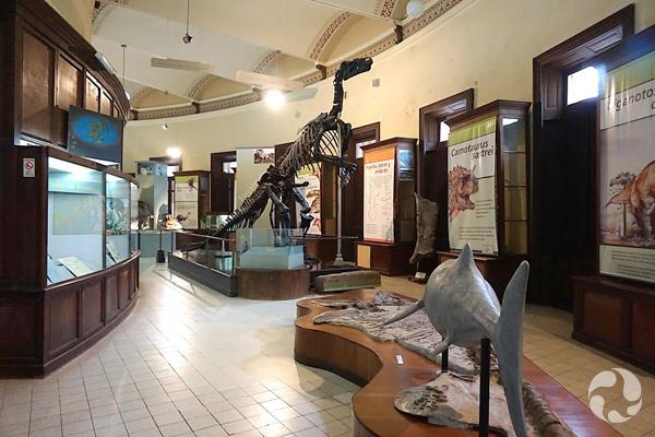 Squelette d'iguanodon debout dans une salle d'exposition.