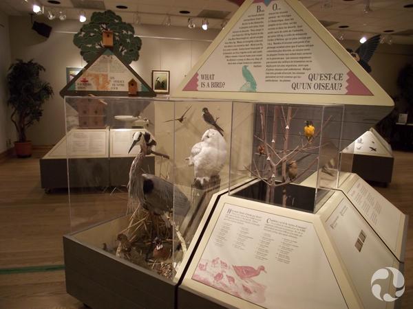 Module d'exposition présentant divers oiseaux.
