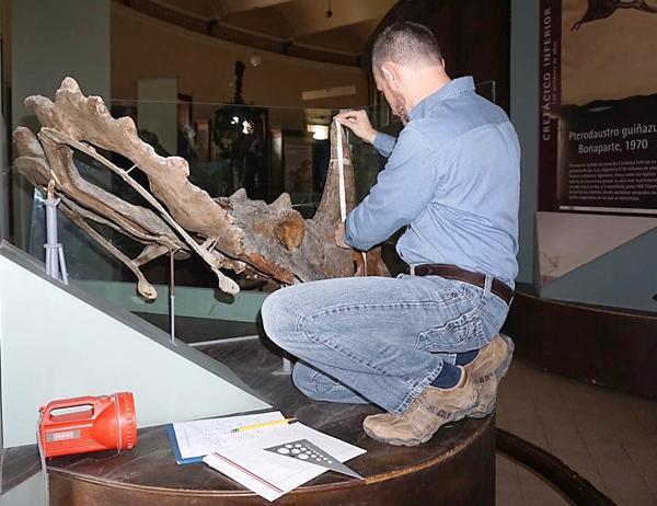Un homme mesure le crâne d'un dinosaure.