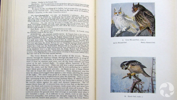 Une page d'un livre.