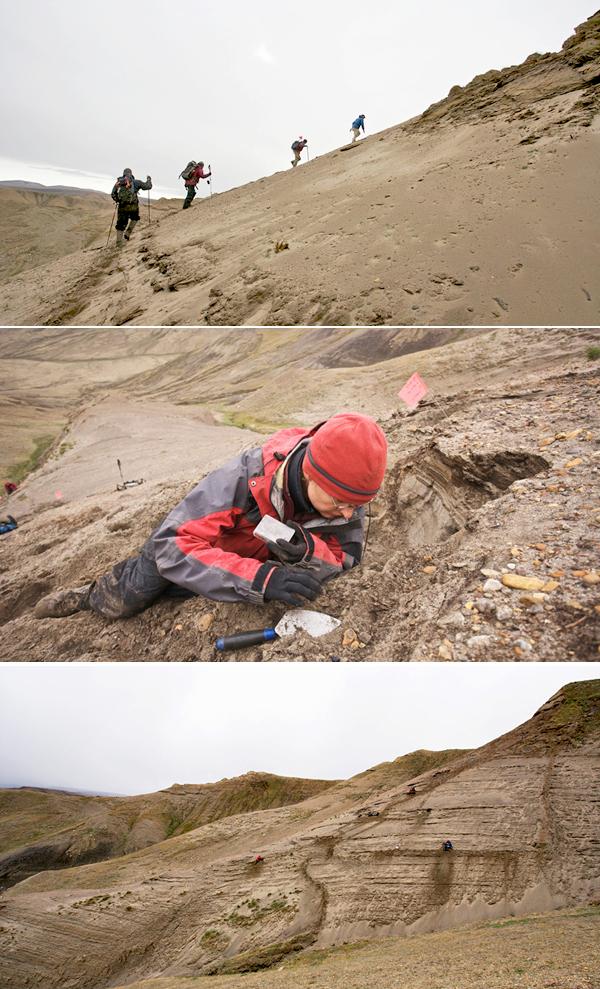 Collage de photos : Quatre personnes montant une pente sableuse. Natalia Rybczynski étendue sur une pente en train d'examiner le sol. Vue sur le talus sableux où ont été découverts les os du chameau.